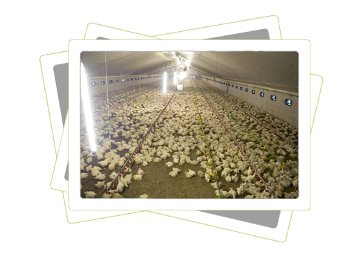 elektra aanleggen in kippenschiuur